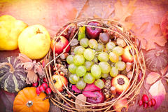 Autumn fruits and vgetables Royalty Free Stock Photos