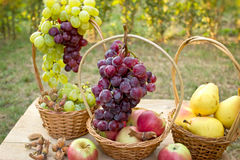 Autumn fruits in wicker basket Stock Images