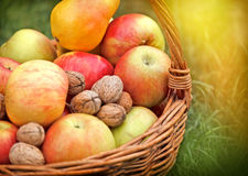 Autumn fruits in wicker basket Royalty Free Stock Photography