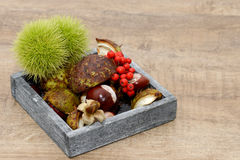 Autumn fruits in the wooden dish Royalty Free Stock Photo