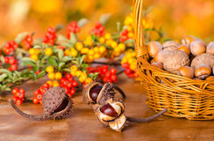 Autumn fruits Royalty Free Stock Images