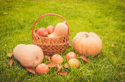 Autumn fruits - yellow pumpkins and red apples Stock Photo