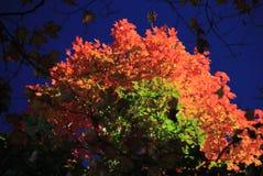 Autumn ftree Stock Photography