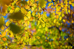 Autumn at full swing Royalty Free Stock Images