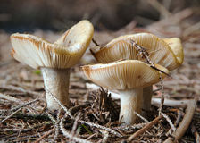 Autumn Fungi Stock Photo