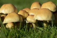 Autumn Fungi Royalty Free Stock Photos