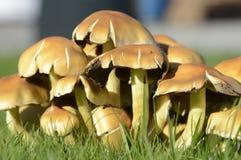 Autumn Fungi Stock Image