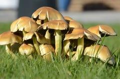 Autumn Fungi Stock Images