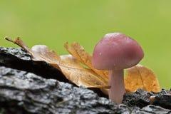 Autumn fungus, Southampton Common stock photos