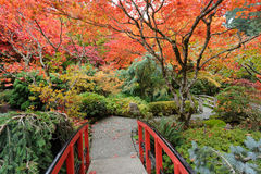 Autumn garden Royalty Free Stock Photography