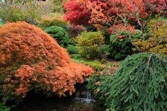 Autumn garden Stock Photo
