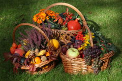 Autumn in garden Royalty Free Stock Images