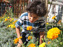 Autumn garden. Colorful autumn garden with boy who smells yellow flowers Stock Photo