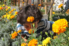 Autumn garden. Colorful autumn garden with boy who smells yellow flowers Stock Photography