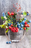 Autumn garden berries on the old wooden background Royalty Free Stock Photography