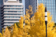 Autumn in a garden in the center of Tokyo Stock Image