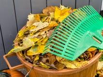 Autumn garden cleaning Stock Photo
