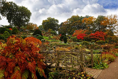 Autumn Garden with colourful bushes Royalty Free Stock Photography