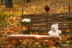 Autumn garden decor. With fence, wood bench and toy bear Royalty Free Stock Image