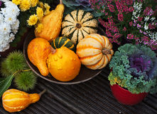 Autumn garden decor Stock Photo