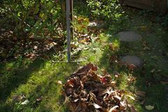 Autumn in garden Stock Images