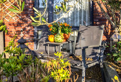 Autumn garden Royalty Free Stock Images
