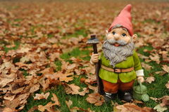 Autumn Garden Gnome. Garden Gnome photographed with autumn leaves Royalty Free Stock Photo