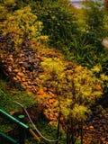 Autumn Garden stock photos