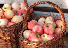Autumn garden harvest, apples in baskets Royalty Free Stock Photo