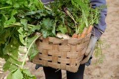 Autumn garden harvest Stock Image
