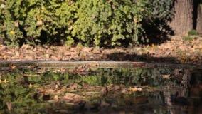 Autumn in the garden stock video footage