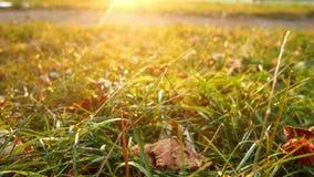Autumn garden leaves yellow stock video