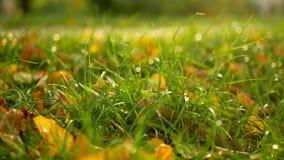 Autumn garden leaves stock video footage