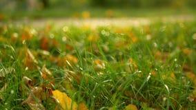 Autumn garden leaves stock footage