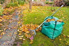 Autumn Garden Maintenance. A rake and sack of collected autumn leaves in a small garden Stock Images