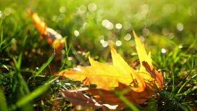 Autumn garden nature stock footage