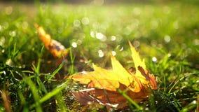 Autumn garden nature stock video