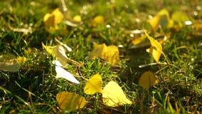 Autumn garden nature stock video footage