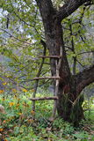 Old apple tree in autumn garden Royalty Free Stock Photography