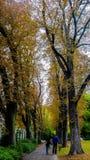 Autumn Garden Pictures aus Deutschland Stockbilder