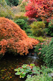 Autumn garden pond royalty free stock image