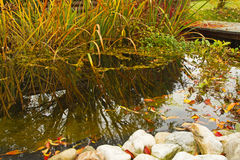 Autumn Garden Pond Stock Photography