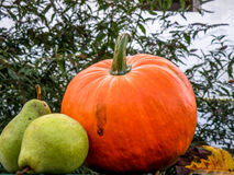 Autumn garden products Stock Images