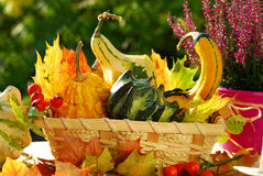 Autumn garden still life Royalty Free Stock Photography