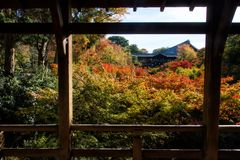Autumn garden in Tofukuji Temple. Autumn foliage garden in Tofukuji Temple during Fall season in November, Kyoto, Japan. Famous travel destination landmark in stock photography