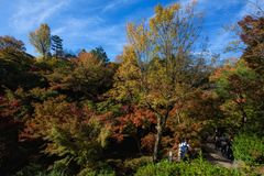 Autumn garden in Tofukuji Temple, Kyoto. People at walk trail to enjoy autumn foliage garden in Tofukuji Temple during Fall season in November, Kyoto, Japan royalty free stock images