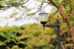 Autumn in garden. Vachirabenjatas Park (Rot Fai Park),thailand Royalty Free Stock Photography