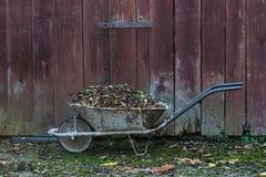 Autumn in the garden Stock Image