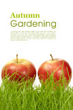 Autumn gardening Royalty Free Stock Photo