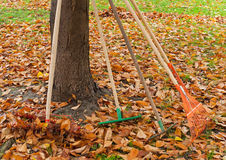 Autumn gardening tools. Rakes to be used for gathering the autumn leaves in the park Stock Image